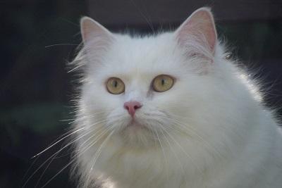 cat-1213880_960_720