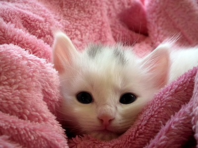 kitten-227009_960_720