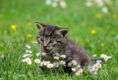 kitty-2948404__340