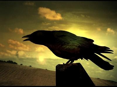 raven-73179_960_720