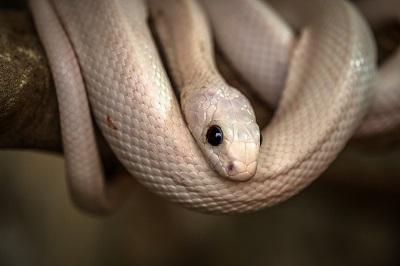 snake-3132693_960_720