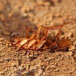 cockroach-3116192_960_720
